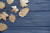 Leaves of trees of gold color on a gray wooden background. Golden autumn. Autumn Composition.