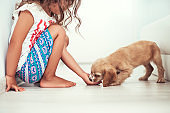 Child with little dogs playing at home. Girl play with puppie.