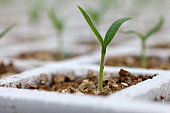 Seedling, Seedling In Greenhouse, Agriculture, Cultivation, Production, Nutrition