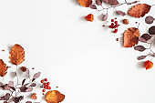 Autumn composition. Physalis flowers, eucalyptus leaves, rowan berries on gray background. Autumn, fall, thanksgiving day concept. Flat lay, top view, copy space