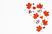 Autumn composition. Pattern made of flowers, maple leaves, berries on white background. Autumn, fall, thanksgiving day concept. Flat lay, top view, copy space