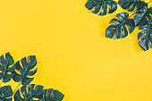 Summer composition. Monstera leaves on yellow background. Summer concept. Flat lay, top view, copy space