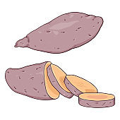 Vector Cartoon Sweet Potato Yam