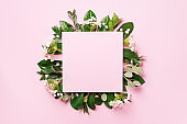 Summer and spring concept. Tropical nature background with green leaves, white flowers and white empty square frame for copy space on pink paper. Top view. Flat lay. Creative advertising