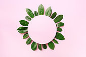 Spring green leaves pattern on pink background. Creative layout. Top view. Flat lay.