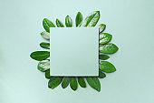 Spring leaves pattern on green background. Creative layout. Top view. Flat lay.