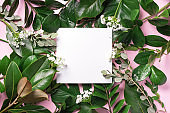 Summer and spring concept. Tropical nature background with green leaves and white empty square frame for copy space on pink paper. Top view. Flat lay. Creative advertising