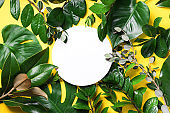 Summer and spring concept. Tropical nature background with green leaves and white empty circle frame for copy space on yellow paper. Top view. Flat lay. Creative advertising