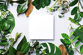 Summer and spring concept. Tropical nature background with green leaves and white empty square frame for copy space. Top view. Flat lay. Creative advertising