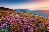 Dramatic scene of the alpine valley in sunlight. Location place Carpathian Ukraine, Europe.