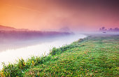 Fantastic foggy field with fresh green grass in the sunlight.