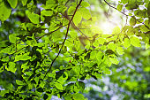 Bright green leaves on the branches in the forest.