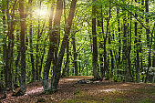 Sunlight in the green forest early morning.