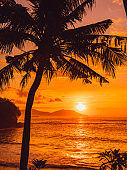 Coconut palm and sunrise or sunset at tropical beach with sea