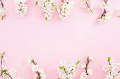 Floral frame with spring flowers on pastel pink background. Flat lay, top view. Spring time