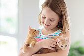 Little child holding baby cat. Kids and pets