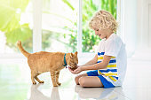 Child feeding home cat. Kids and pets.