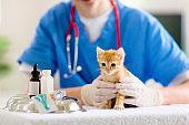 Vet with cat. Kitten at veterinarian doctor.