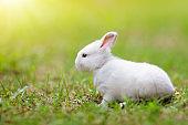 Baby rabbit outdoor. Easter bunny.