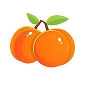 Fresh apricot vector design illustration isolated on white background