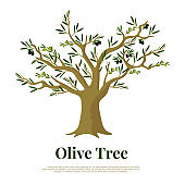 Olive tree flat vector banner template