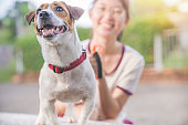 Asian family teenage girl playing with playful her pets Jack Russell Terrier dog at garden in summer morning