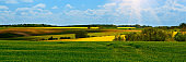 Banner 3:1. Green wheat and Yellow rapeseed fields in bloom. Spring background. Copy space. Soft focus
