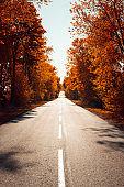 Asphalt road in autumn forest. Autumnal background