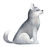 Little beautiful sled dog puppy character portrait. Sitting, side view, looking up. Clever eyes, gray furry coat, cute playful tail. Handdrawn water color graphic painting on white, cutout element.
