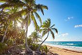 Palm Beach In Tropical Idyllic Paradise Island - Caribbean - Dominican Republic Punta Cana