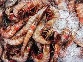 Close up Fresh raw Thai white shrimps on cold ice