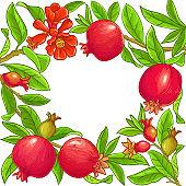 pomegranate vector frame