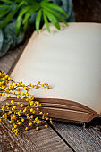 Opened book with blank pages on an old wooden table with mimosa flowers.