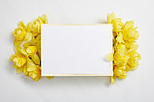 top view of white empty card with yellow narcissus flowers on white background