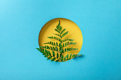 geometric background with fern leaf in yellow round hole on blue paper