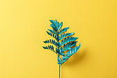 green fern leaf on yellow paper background