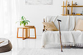 modern living room with sofa, coffee table and walking cane