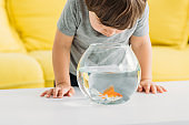 adorable curious boy looking into aquarium with gold fish