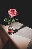 pink rose flower in glass bottle on stone table with sheets of paper isolated on black