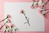 beautiful tender pink and white carnation flowers and blank card on pink background