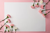 beautiful pink and white carnation flowers and blank card on pink background