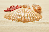selective focus of orange seashell on beach in summertime