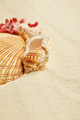 selective focus of orange seashells on beach in summertime