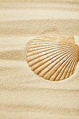 selective focus of seashell on sandy beach in summertime