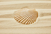 seashell on beach with golden sand in summertime