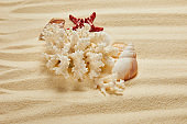 white coral near seashells and starfish on sandy beach in summertime