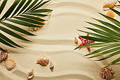 top view of green palm leaves near red starfish and seashells on sandy beach