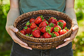 cropped view of woman holding wicker bowl with strawberries