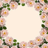 Round frame of flowers. Pink wild roses on yellow background