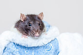 Concept image of symbol chinese happy new year 2020. Christmas rat. Closeup small mouse on blue background. Lunar horoscope sign